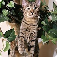 Adopt A Pet :: Emma - Greensboro, GA