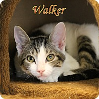 Adopt A Pet :: Walker - Winter Haven, FL