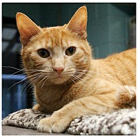 Adopt A Pet :: Honey - Forked River, NJ