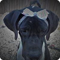 Adopt A Pet :: Katie - Baden, PA