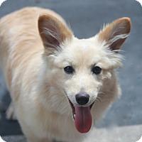 Adopt A Pet :: Dorchester - Woonsocket, RI