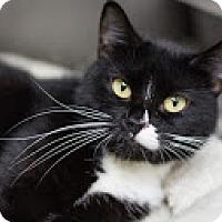 Adopt A Pet :: Adeline - Bradenton, FL