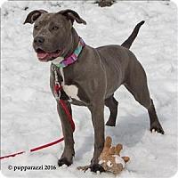 Adopt A Pet :: Stella - Duluth, MN