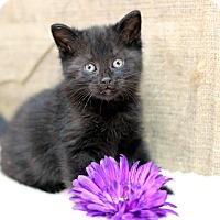 Adopt A Pet :: Generosa - Midland, MI