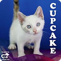 Adopt A Pet :: Cupcake - Carencro, LA