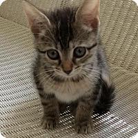 Adopt A Pet :: Nova - Mobile, AL
