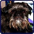 Adopt A Pet :: FINLEY in Jasper, IN.
