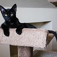 Adopt A Pet :: Ray Ray - Flower Mound, TX