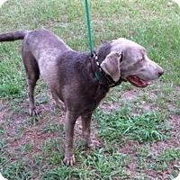 Adopt A Pet :: Jackson - Irmo, SC