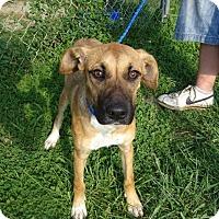 Adopt A Pet :: Sadie - Delaware, OH