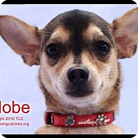 Adopt A Pet :: Adobe - Simi Valley, CA