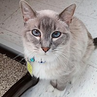 Adopt A Pet :: Ceko - Lakewood, CO