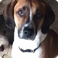 Adopt A Pet :: Marmaduke - CUMMING, GA