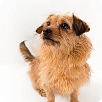 Adopt A Pet :: Regis - Sanford, NC