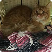 Adopt A Pet :: Shanan - Hudson, NY