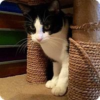 Adopt A Pet :: Preston - Dalton, GA