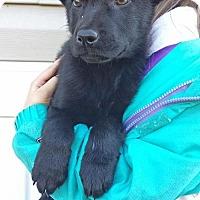 Adopt A Pet :: I LItter--arriving soon - Chichester, NH