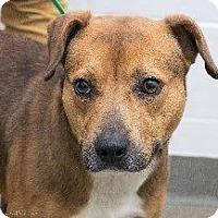 Adopt A Pet :: Franklin - Laingsburg, MI