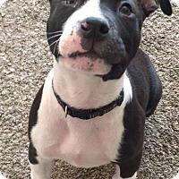 Adopt A Pet :: Xander - Las Vegas, NV