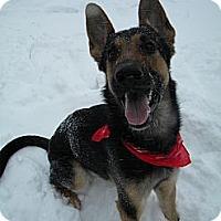 Adopt A Pet :: Kobie - Monteregie, QC