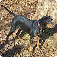 Adopt A Pet :: Xanadu - Dallas, TX