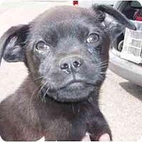 Adopt A Pet :: Alex - Braintree, MA