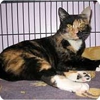 Adopt A Pet :: Patches - Shelton, WA