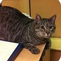 Adopt A Pet :: Archie - Modesto, CA