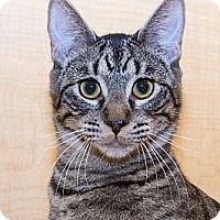 Adopt A Pet :: Garnet - Irvine, CA