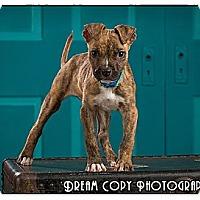 Adopt A Pet :: Wal-e - Owensboro, KY
