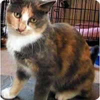 Adopt A Pet :: Monique - Alexandria, VA