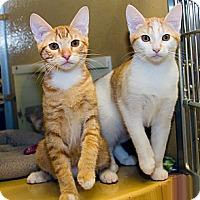 Adopt A Pet :: Tara & Melody - Irvine, CA