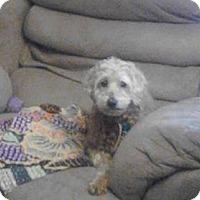 Adopt A Pet :: Dutchess - Prole, IA