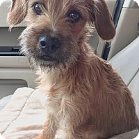 Adopt A Pet :: Baby Belle - San Antonio, TX