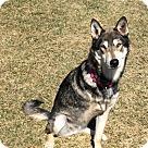 Adopt A Pet :: Wylie 4028
