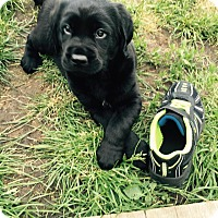 Adopt A Pet :: Nashville - Plainfield, IL