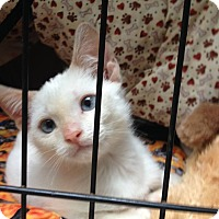 Adopt A Pet :: Harry - New Port Richey, FL