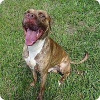 Adopt A Pet :: JULIO - Brooksville, FL