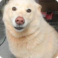 Adopt A Pet :: Jasmine - Lincolnton, NC