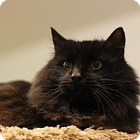 Adopt A Pet :: Bear - Grants Pass, OR