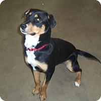 Adopt A Pet :: SHOTZI - Medford, WI