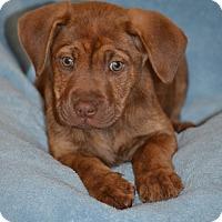 Adopt A Pet :: Bonnie - Albemarle, NC