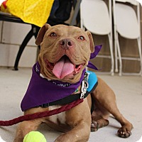 Adopt A Pet :: Pete - Gainesville, FL