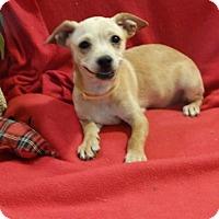 Adopt A Pet :: Kayla - Vacaville, CA
