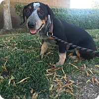 Adopt A Pet :: Loetta - Bakersfield, CA