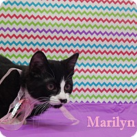 Adopt A Pet :: Marilyn Monstache - Bucyrus, OH