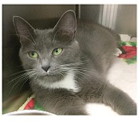 Adopt A Pet :: Ruby - Webster, MA