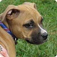 Adopt A Pet :: Mandy - Unionville, PA