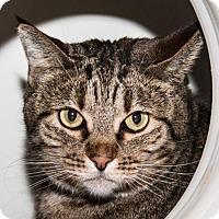 Adopt A Pet :: Tweedle - Prescott, AZ