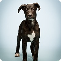 Adopt A Pet :: Stockton - MEET ME - Bedminster, NJ